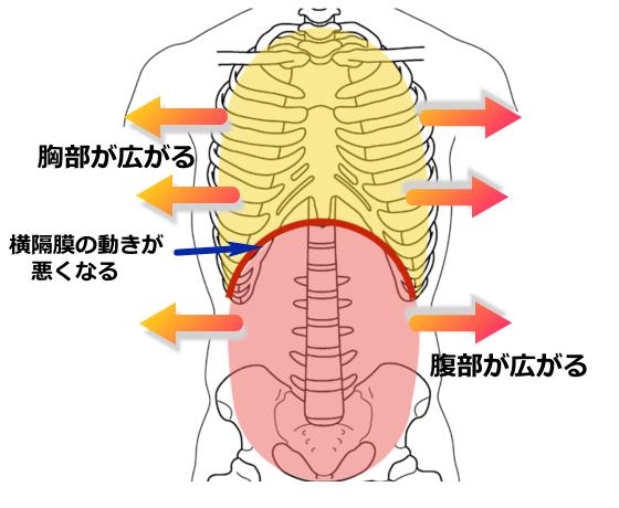 胸部・腹部が広がる、横隔膜の動きが悪くなる。