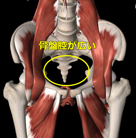 骨盤腔の図