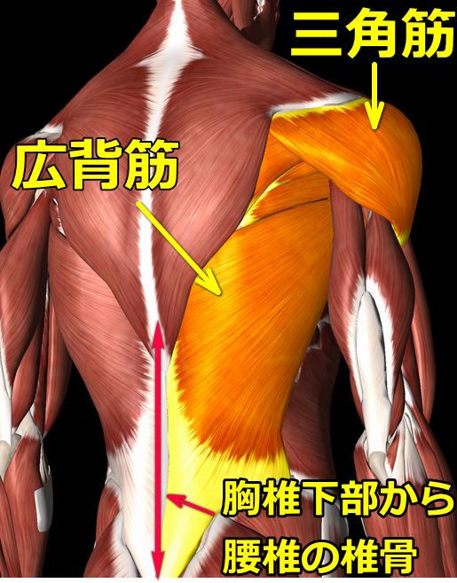 五十肩の図